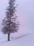 初雪が降った