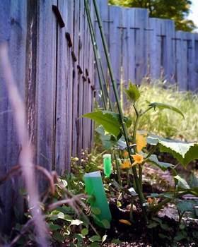 秘密の菜園