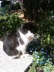 梅田の猫・1