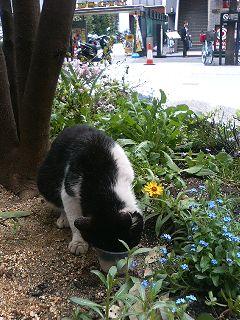 梅田の猫・2