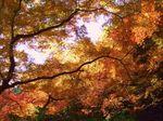 紅葉、満喫